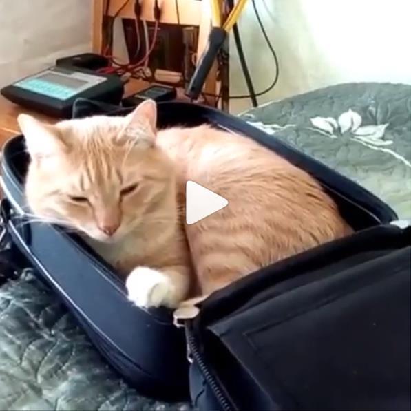 Кот биорезонанс плюсный