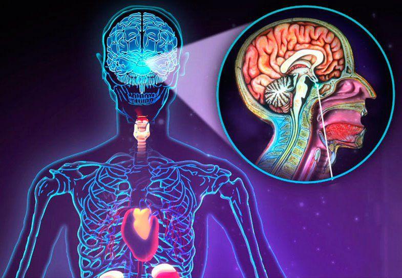 Тестирование нарушений эндокринной системы
